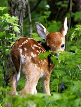 Hayvanların çok masum olduğunu kanıtlayan 20 fotoğraf