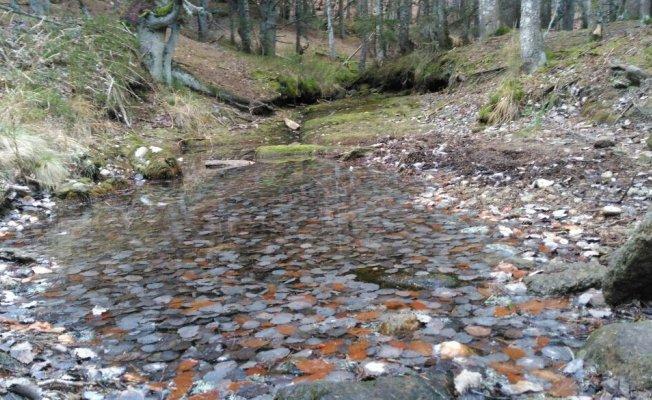 Uludağ'da kar yağışı öncesi doğa yürüyüşü