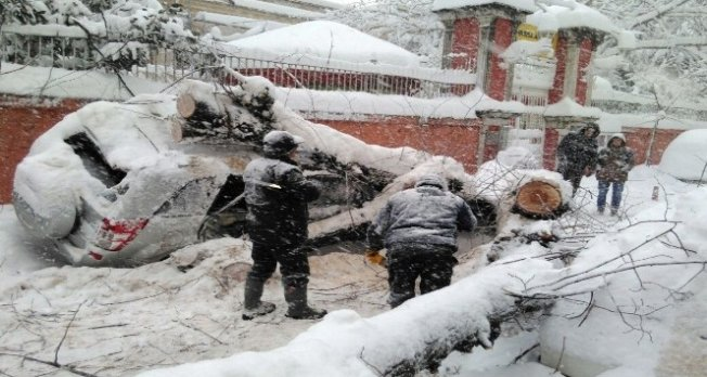 Bursa'da kar ağaçları devirdi!