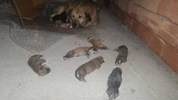 6 yavru soğuktan donarak öldü