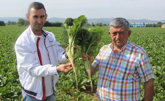 Bursa'da üretici isyanda: Hem sağlığa hem bize zarar