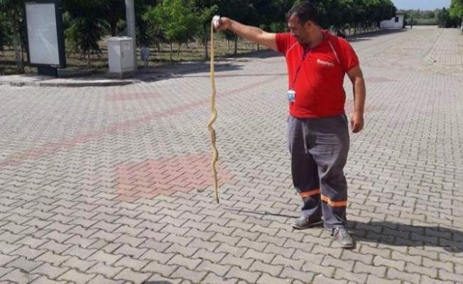 Bursa'da okul bahçesinde zehirli yılan alarmı