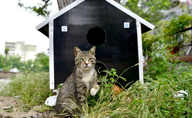 Bursa'da sokak hayvanlarına bir kap mutluluk