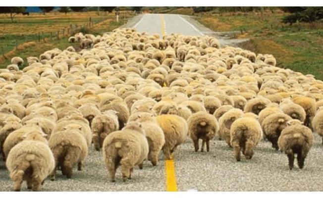 """""""300 koyun + maaş"""" projesi ile ilgili Bakan'dan flaş açıklama!"""