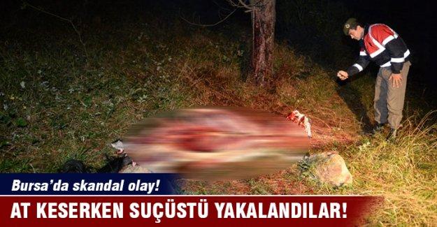 Bursa'da at keserken yakalandılar!