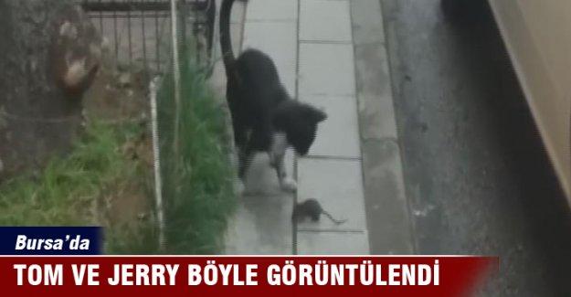 Bursa'da Tom ve Jerry böyle gerçek oldu