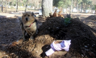 Bursa'da vefakar köpek sahibi ölünce...
