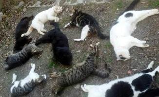 Vahşet 30 kedi katledildi! 1 köpek kurtarıldı