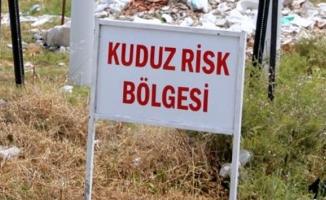 Bursa'da kuduz alarmı!