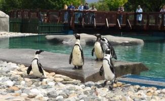 Bursa Hayvanat Bahçesi'nin yeni misafirleri!