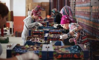 Bursa'nın siyah inciri dünyaya açılıyor