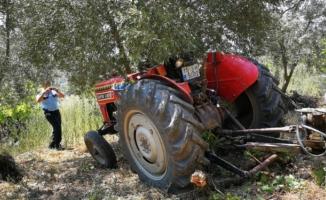 Bursa'da traktör sürücüsünü zeytin ağacı kurtardı