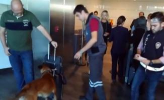 Avusturya'ya giden yabancı yolculara köpekli arama!