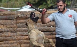 Bursa'da köpek saldırılarından korunmak için eğitim