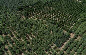 Türkiye'deki üretimin yarısını Bursa'nın ilçesi karşılıyor