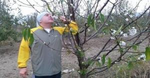 Bursa'da kiraz ağaçları çiçek açtı