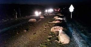 Kamyonet'in çarptığı 44 koyun telef oldu