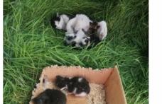 Yanan binadaki kedi ve 4 yavrusu kurtarıldı