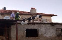 İnek çatıda mahsur kaldı!