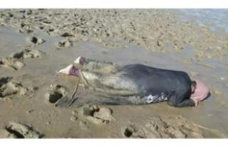 İnsanlık bir kez daha kıyıya vurdu!