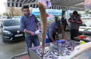 Marmara'da köpek balığı yakalandı