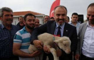 Bursa'da koyun yetiştiricisine dev destek!