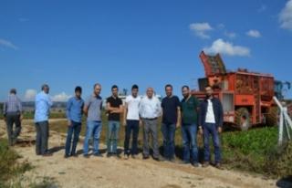 Bursa'da pancar hasadı başladı