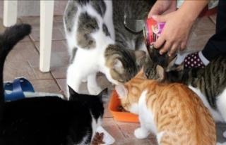 Evcil hayvanlar 'PetSurfer' ile güvenli...