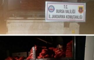Bursa'da jandarmadan kaçakçılara yönelik...