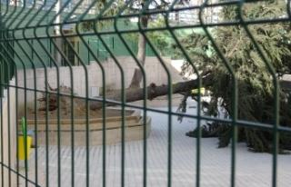 Bursa'da lodos okul bahçesindeki ağacı devirdi