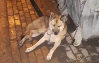 Bursa'da ilginç olay! Kurt sandılar köpek...