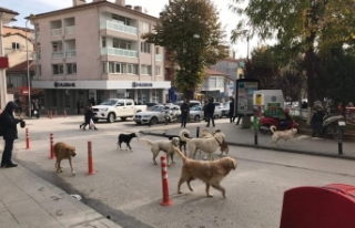 Türkiye'de köpekler neden saldırganlaştı?