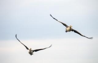 Uluabat Gölü'nde kuş sayımı! Tek tek saydılar