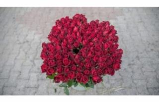 Sevgililer Günü'nde hedef 3,5 milyon gül satışı!