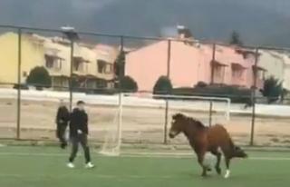 Bursa'da futbol maçında sahaya at girdi