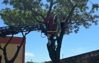 Kediyi kurtarmak için çıktığı ağaçta mahsur...
