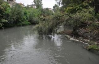 Irmağın suyu siyaha büründü, balık ölümleri...