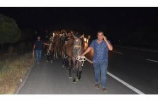 Yarış atları telef olmuştu! Kaçanlar yakalandı...