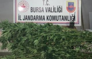 Bursa'da fotokapanla zehir tacirlerini yakaladılar