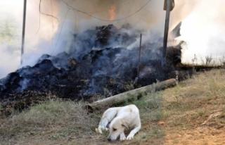6 yavrusu yangında telef olan köpek, olay yerinden...