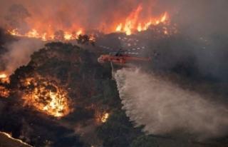 Avustralya'da 6 aydır devam eden yangınlar...