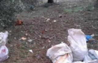 Burhaniye'de Zeytin Hırsızlarına Geçit Yok