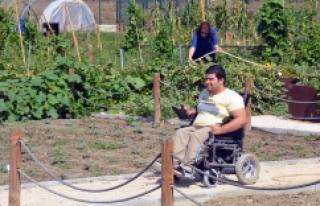 Bursa Nilüfer'de tekerlekli sandalyeyle tarlada...