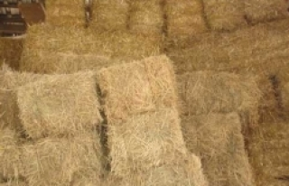 FETÖ'nün imamı samanlıkta yakalandı