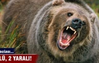 Kars'ta ayı saldırısı 2 ölü 2 yaralı