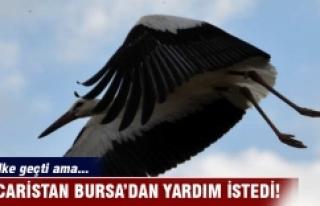 Macaristan Bursa'dan Garam'ı bulmak için...