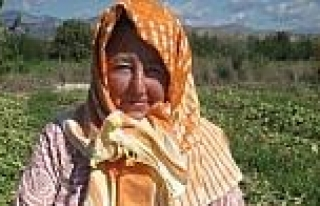 Ödemişli Turşuluk Salatalık Üreticileri Bayramı...