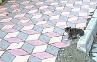 (özel Haber) Dursunbey'de Kedi Kurtarma Operasyonu