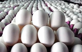 Yumurta fiyatları arttı