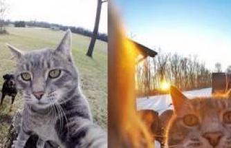 Selfie ustası 'Kedi Manny'